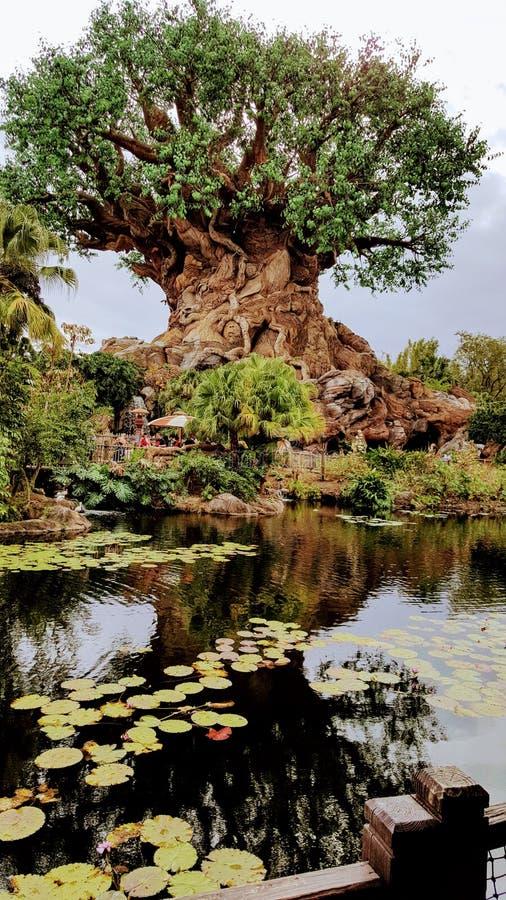 Δέντρο της ζωής στο πάρκο ζωικών βασίλειων Disneys στοκ φωτογραφία με δικαίωμα ελεύθερης χρήσης