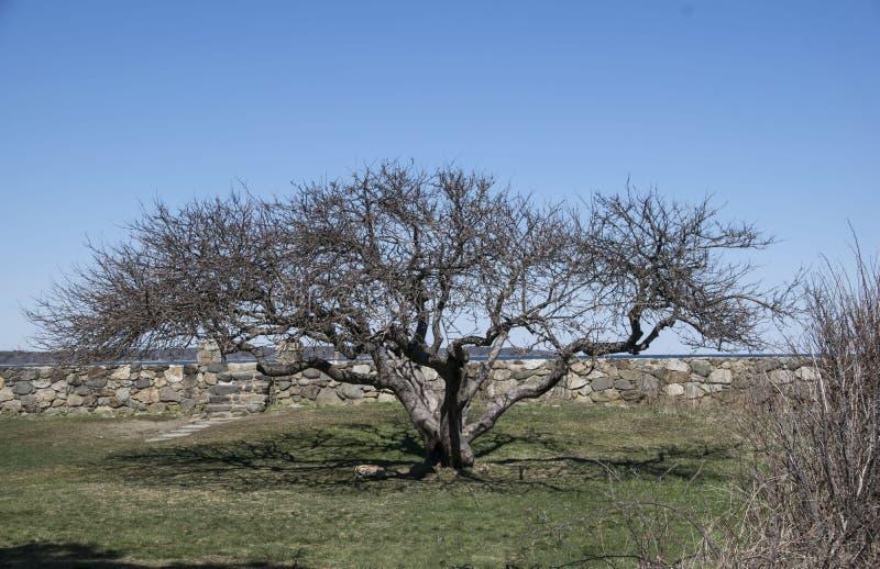 Δέντρο της ζωής στοκ φωτογραφίες
