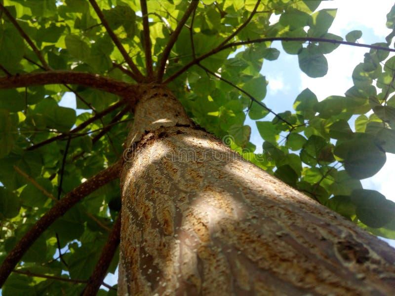 Δέντρο της ζωής στοκ φωτογραφία