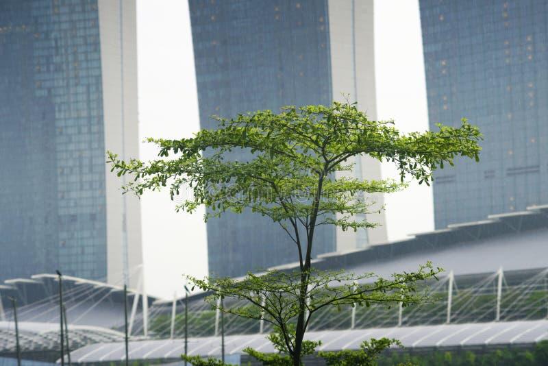 Δέντρο της Σιγκαπούρης στοκ φωτογραφία
