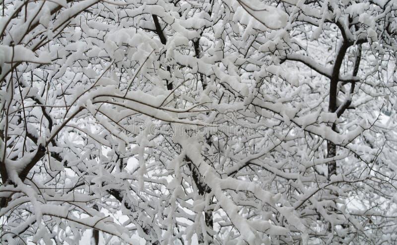 Δέντρο της Apple στο χιόνι το χειμώνα, υπόβαθρο στοκ φωτογραφίες