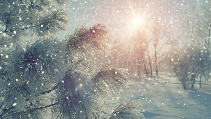 Δέντρο του FIR που καλύπτεται με το hoarfrost και το χιόνι στοκ εικόνα