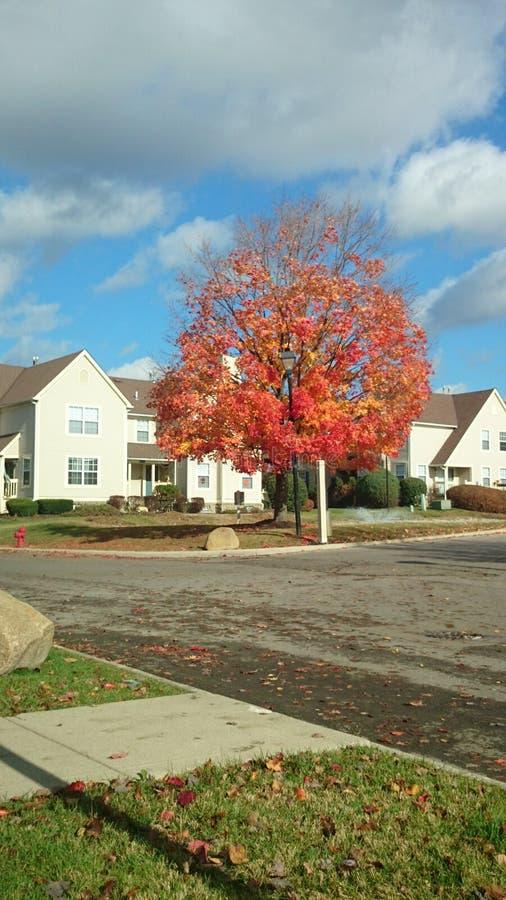 Δέντρο το φθινόπωρο στοκ φωτογραφία με δικαίωμα ελεύθερης χρήσης