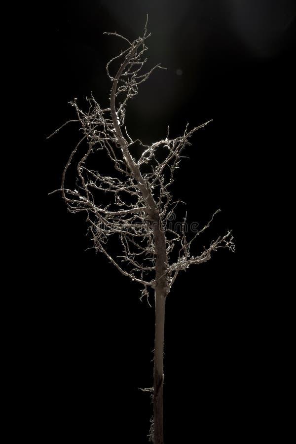 Δέντρο των ριζών 4 στοκ φωτογραφία