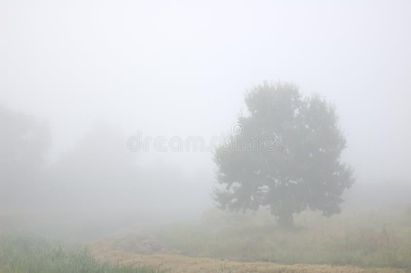 δέντρο υδρονέφωσης στοκ φωτογραφίες με δικαίωμα ελεύθερης χρήσης