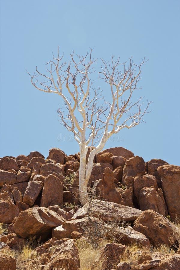Δέντρο φαντασμάτων στοκ φωτογραφίες