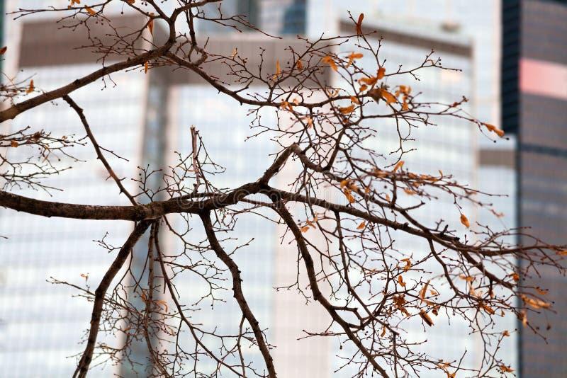 Δέντρο φθινοπώρου με τα τελευταία φύλλα στην πόλη στοκ εικόνα με δικαίωμα ελεύθερης χρήσης