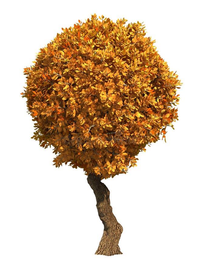 Δέντρο φθινοπώρου που απομονώνεται στο άσπρο υπόβαθρο. στοκ φωτογραφίες
