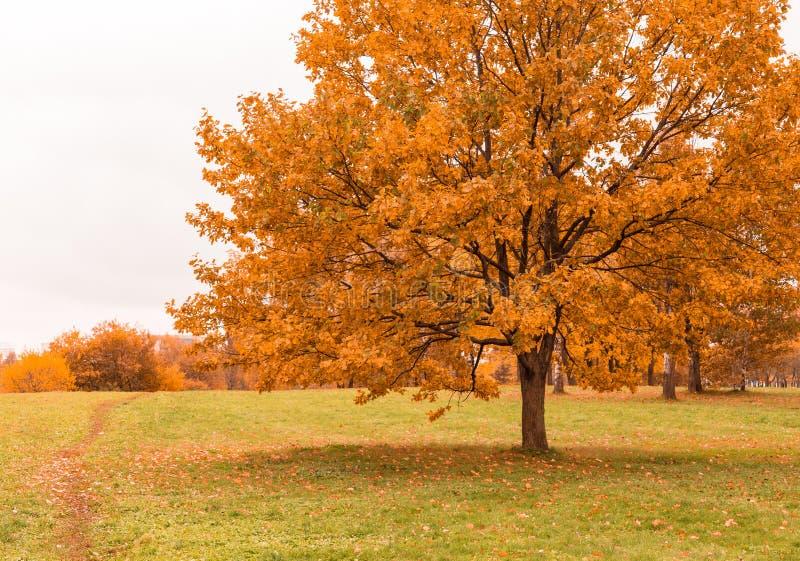 Δέντρο φθινοπώρου στο ξηρό λιβάδι στοκ φωτογραφία με δικαίωμα ελεύθερης χρήσης