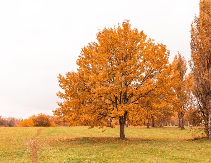 Δέντρο φθινοπώρου στο ξηρό λιβάδι στοκ εικόνα με δικαίωμα ελεύθερης χρήσης