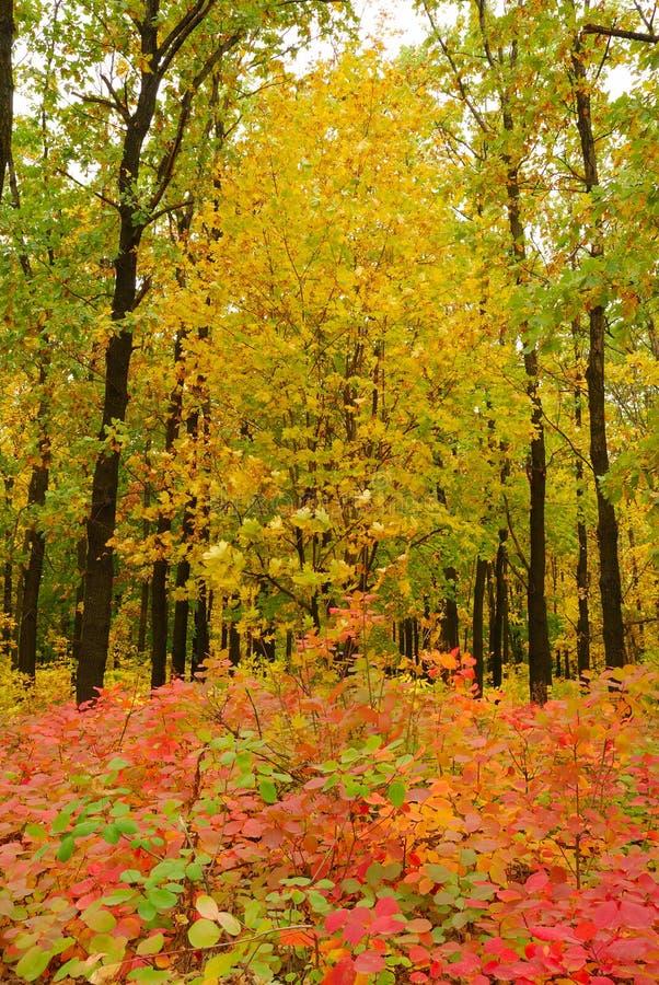 δέντρο φθινοπώρου στοκ εικόνες με δικαίωμα ελεύθερης χρήσης