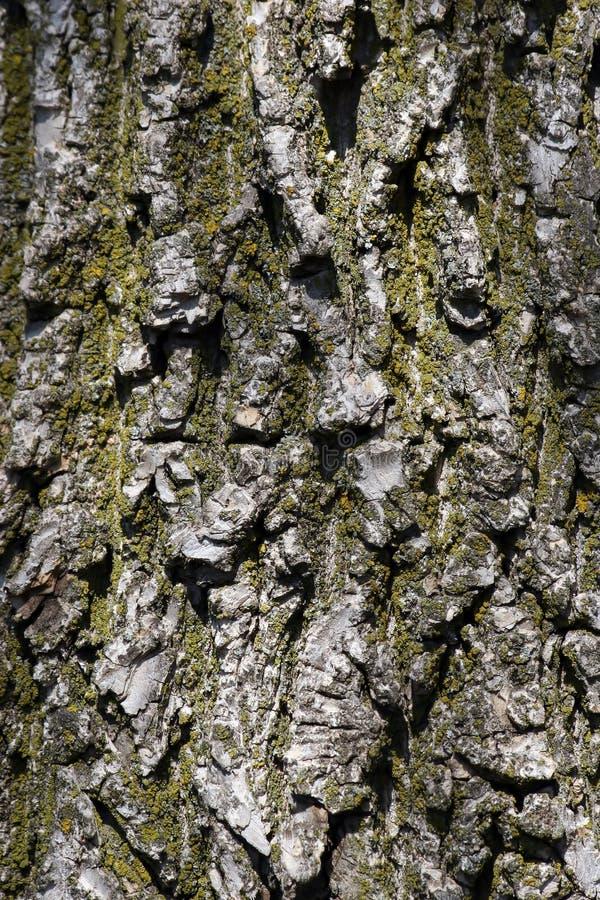 Download δέντρο φλοιών στοκ εικόνες. εικόνα από μορφή, σύσταση, κραχτών - 94806