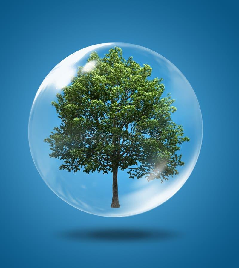 δέντρο φυσαλίδων ελεύθερη απεικόνιση δικαιώματος