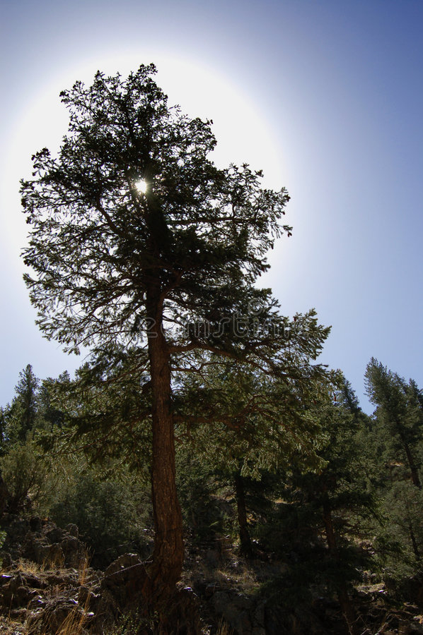 δέντρο φωτοστεφάνου στοκ φωτογραφίες με δικαίωμα ελεύθερης χρήσης