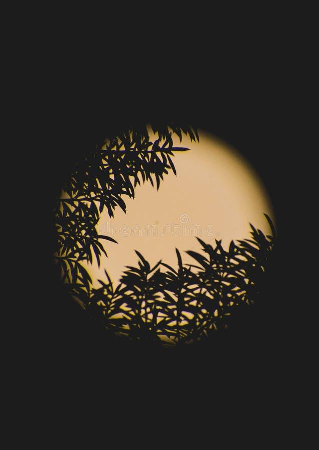 Δέντρο φύλλων στο μεγάλο υπόβαθρο φεγγαριών στοκ εικόνα με δικαίωμα ελεύθερης χρήσης