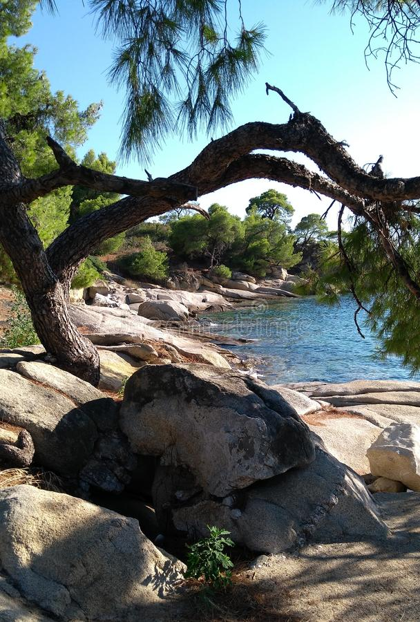 Δέντρο φύσης στην παραλία στοκ φωτογραφίες με δικαίωμα ελεύθερης χρήσης