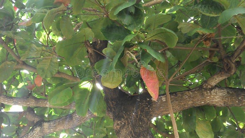 Δέντρο, φύλλα και κλάδοι κάστανων στοκ φωτογραφία με δικαίωμα ελεύθερης χρήσης