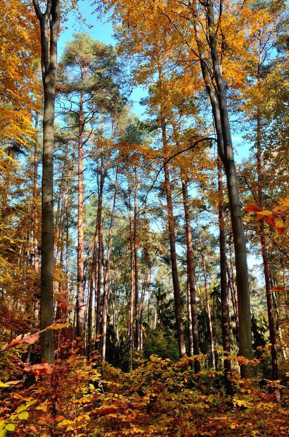 Δέντρο 9 φύλλων φθινοπώρου στοκ φωτογραφία