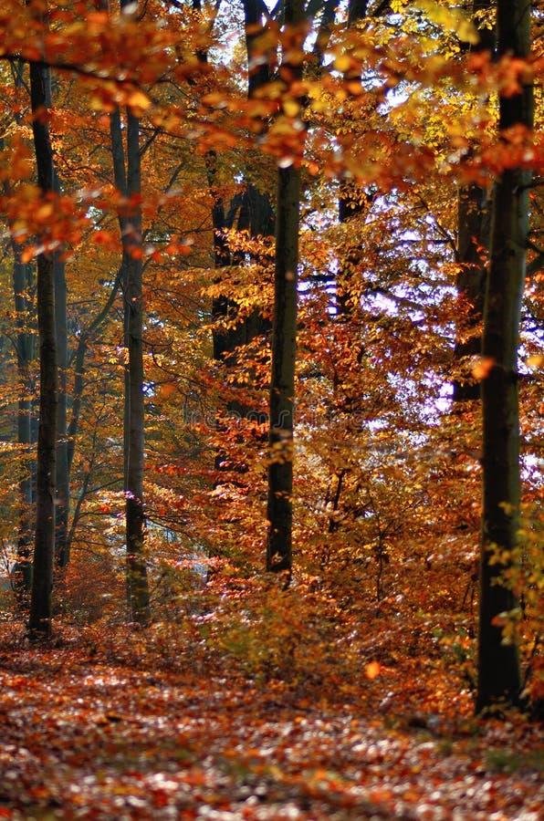 Δέντρο 7 φύλλων φθινοπώρου στοκ εικόνες