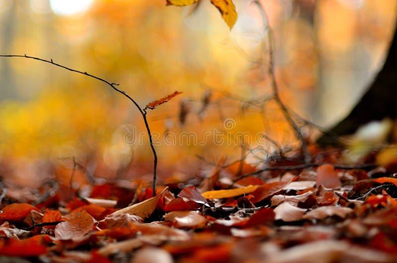 Δέντρο 6 φύλλων φθινοπώρου στοκ εικόνα