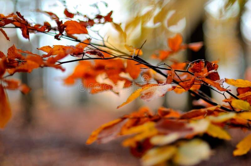 Δέντρο 5 φύλλων φθινοπώρου στοκ φωτογραφίες
