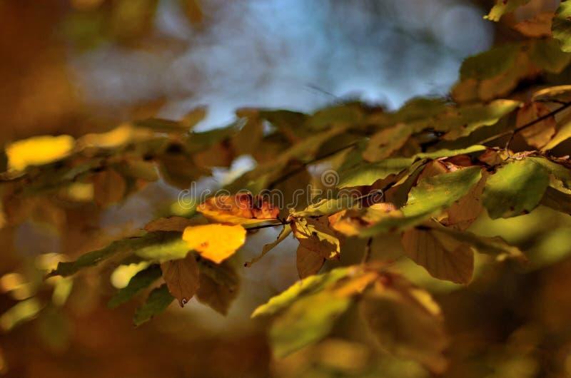 Δέντρο 3 φύλλων φθινοπώρου στοκ φωτογραφίες με δικαίωμα ελεύθερης χρήσης