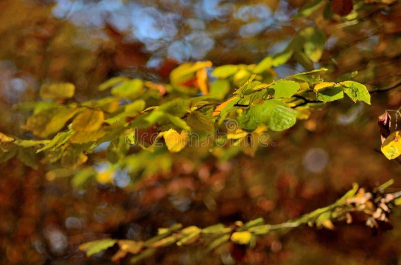 Δέντρο 4 φύλλων φθινοπώρου στοκ εικόνα με δικαίωμα ελεύθερης χρήσης