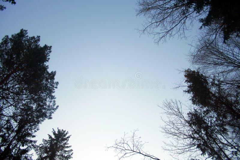Δέντρο χειμερινού ουρανού στοκ εικόνα με δικαίωμα ελεύθερης χρήσης