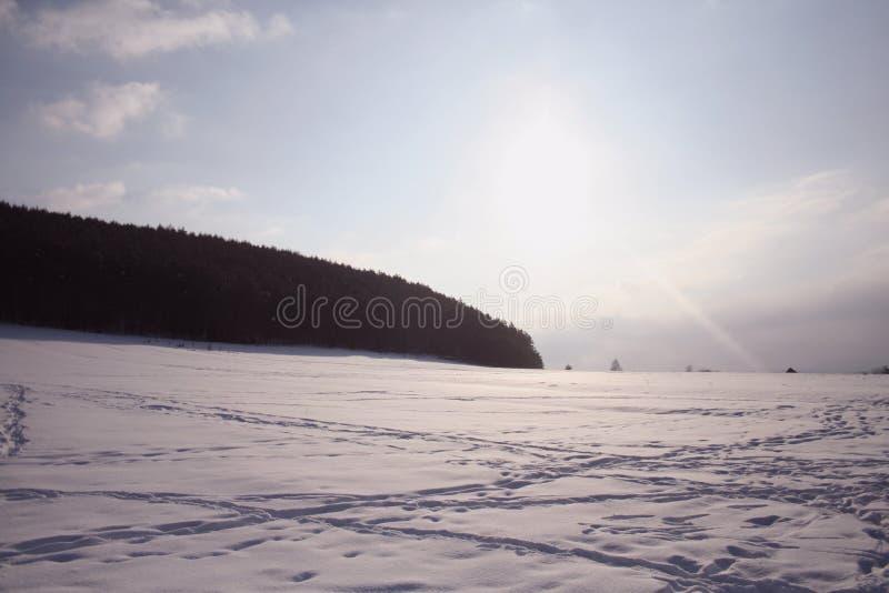 Δέντρο χειμερινού ουρανού στοκ φωτογραφία με δικαίωμα ελεύθερης χρήσης