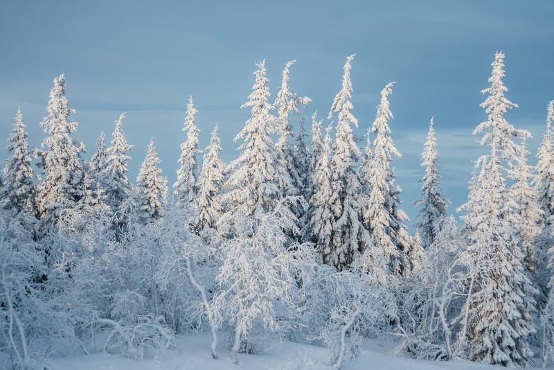δέντρο χιονιού έλατου κάτ&ome στοκ φωτογραφία