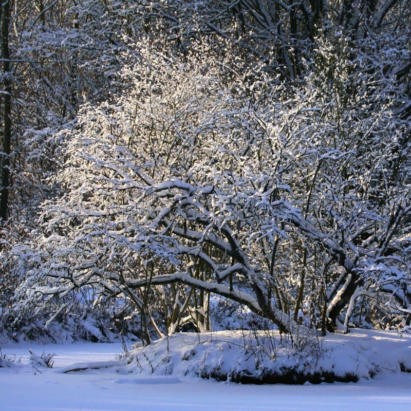 δέντρο χιονιού κάτω στοκ εικόνα με δικαίωμα ελεύθερης χρήσης