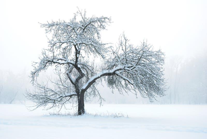 δέντρο χιονιού μήλων κάτω από το χειμώνα στοκ φωτογραφίες