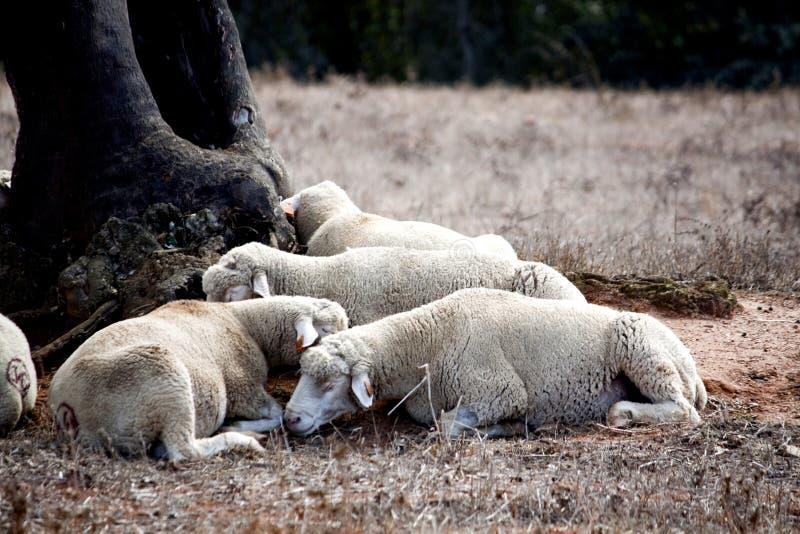 δέντρο ύπνου κάτω στοκ φωτογραφία με δικαίωμα ελεύθερης χρήσης
