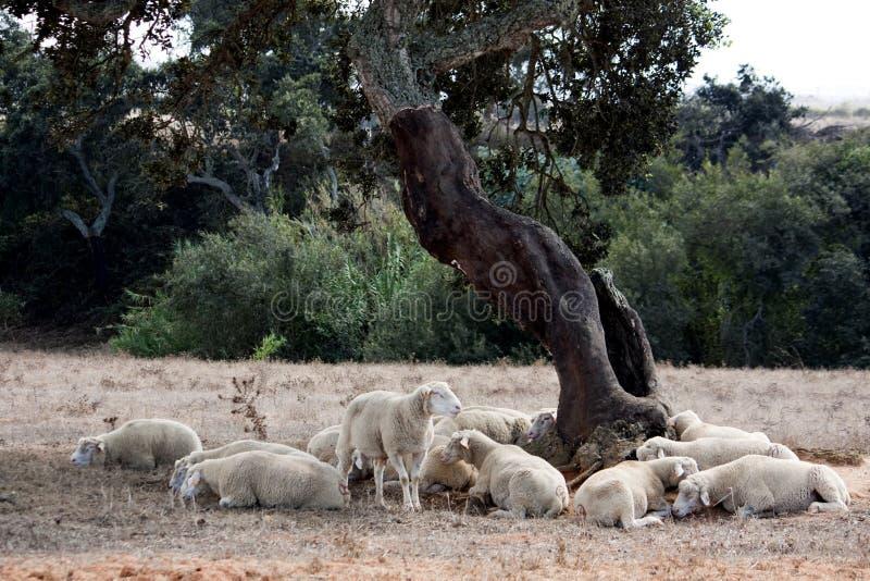 δέντρο ύπνου κάτω στοκ εικόνα