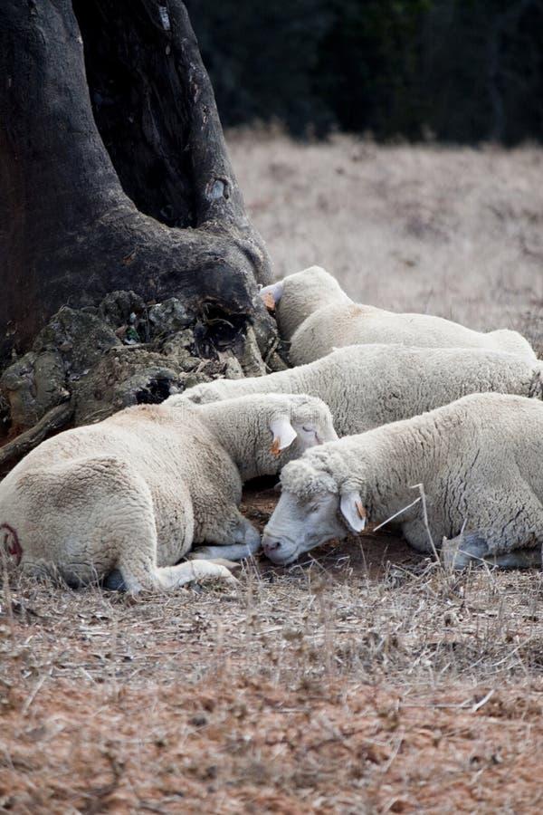 δέντρο ύπνου κάτω στοκ εικόνες με δικαίωμα ελεύθερης χρήσης