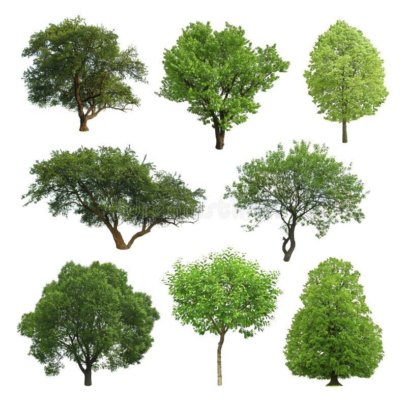 Download δέντρο στοκ εικόνα. εικόνα από μοναξιά, ενιαίος, φύση - 13187313