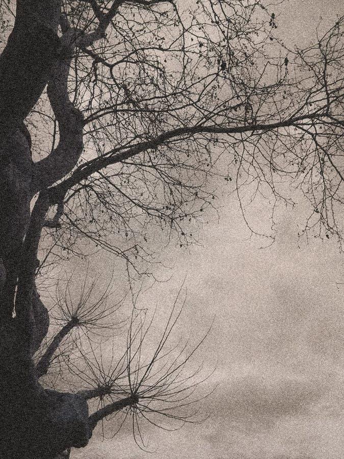 Δέντρο στοκ φωτογραφία με δικαίωμα ελεύθερης χρήσης