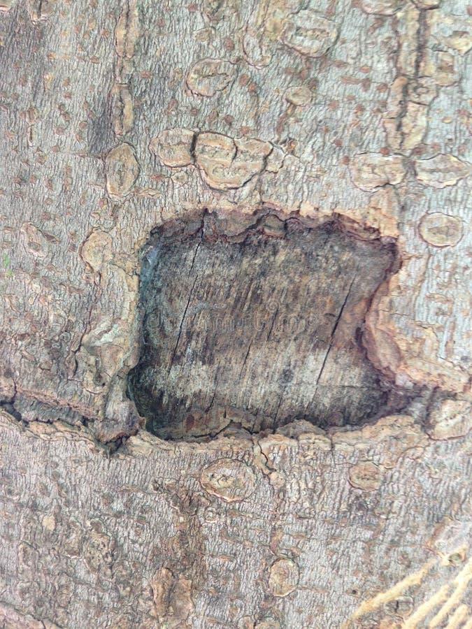 Δέντρο café στοκ φωτογραφία με δικαίωμα ελεύθερης χρήσης