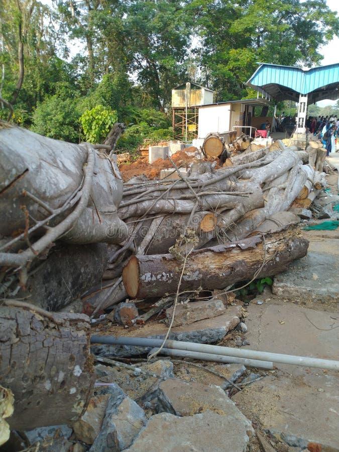 Δέντρο Cutted στοκ φωτογραφία με δικαίωμα ελεύθερης χρήσης