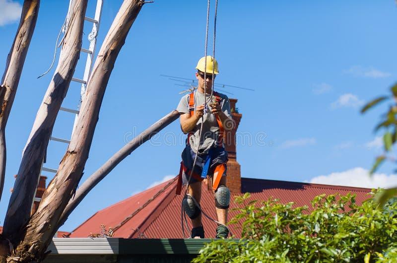 Δέντρο Feller στην εργασία στοκ φωτογραφία με δικαίωμα ελεύθερης χρήσης