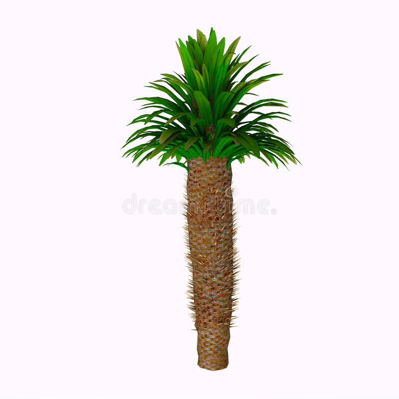 Δέντρο lamerei Pachypodium ελεύθερη απεικόνιση δικαιώματος