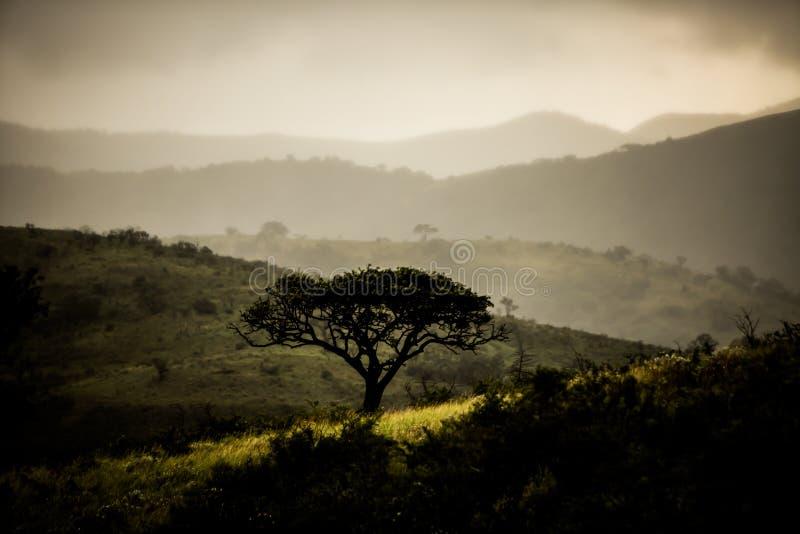 Δέντρο Marula το χειμώνα στοκ φωτογραφία με δικαίωμα ελεύθερης χρήσης
