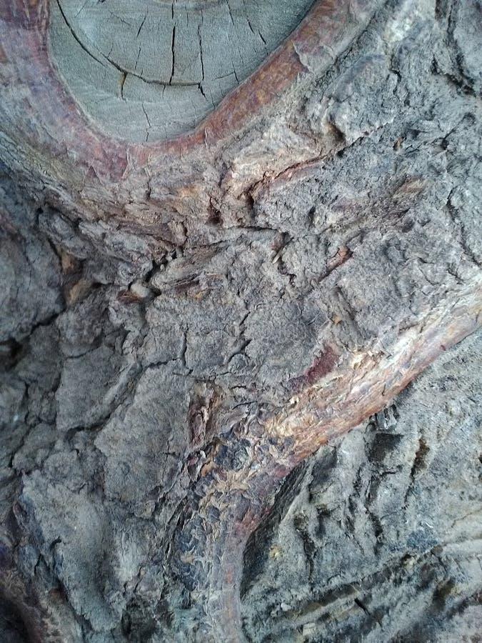 Δέντρο neem Ινδός στοκ εικόνα