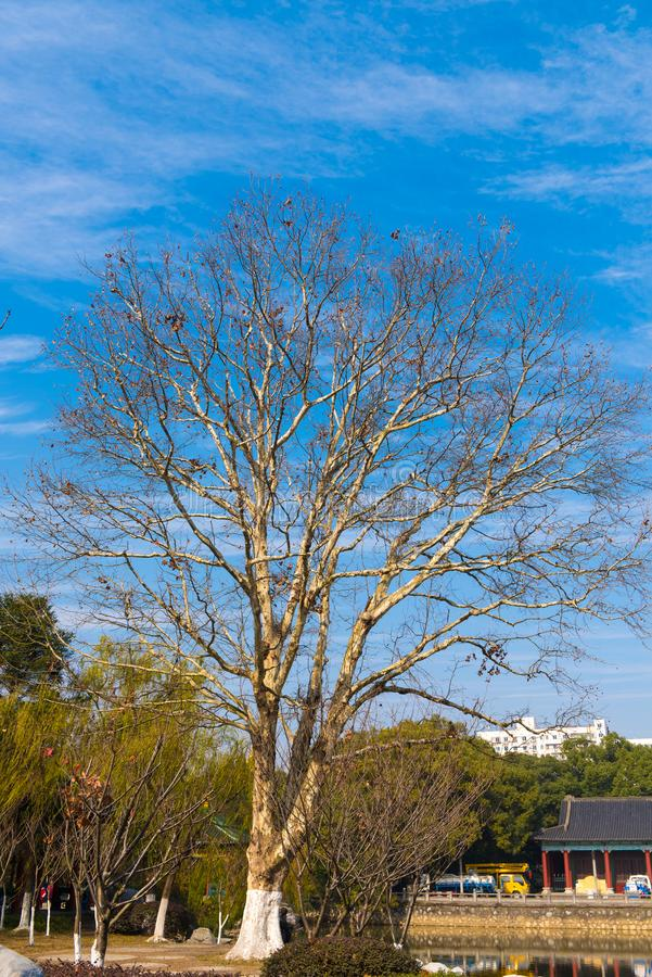 Δέντρο Neem στοκ εικόνες