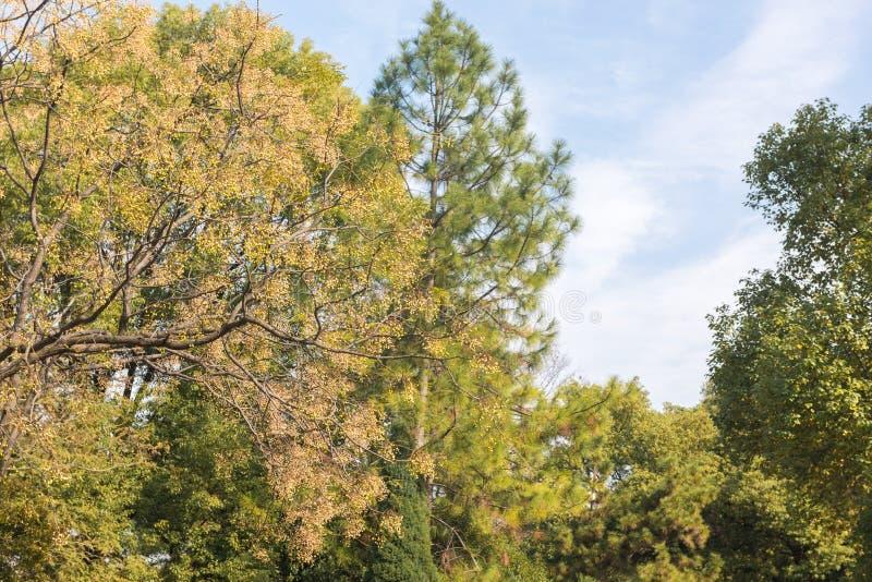 Δέντρο Neem στοκ φωτογραφία με δικαίωμα ελεύθερης χρήσης