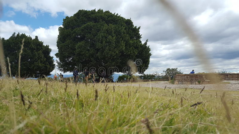 Δέντρο Oax στοκ εικόνες με δικαίωμα ελεύθερης χρήσης