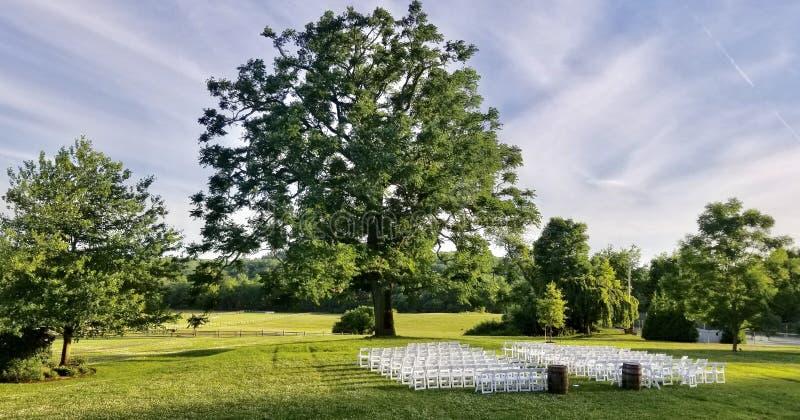 Δέντρο OldOak στοκ εικόνα