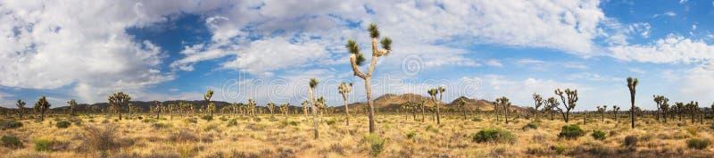 δέντρο panroama joshua στοκ φωτογραφίες