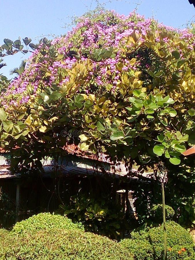 Δέντρο Polas στοκ φωτογραφίες