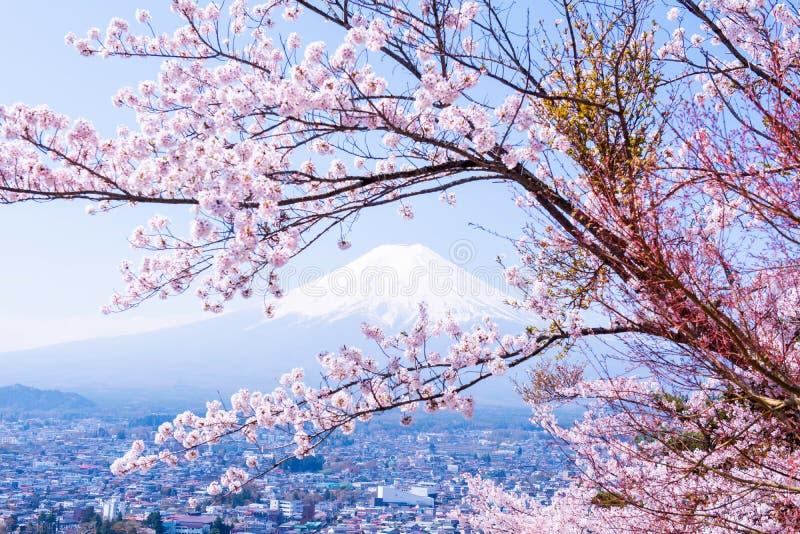 Δέντρο Sakura στην Ιαπωνία Ανθίζοντας λουλούδι ανθών κερασιών στοκ εικόνες